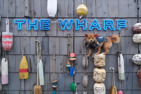 Ocean Drive and Tito's Handmade Vodka present Bark & Brunch at The Wharf